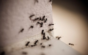 8 Ways to Get Rid of Carpenter Ants