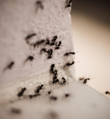 8 Ways to Get Rid of Carpenter Ants