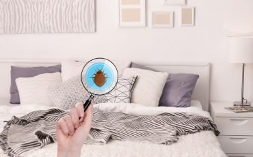 How Do I Know If My Bed Has Bed Bugs?